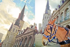 Saint Louis cathedral and horse in New Orleans