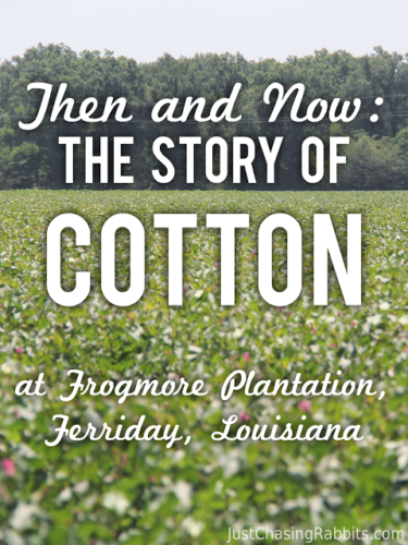 Story of Cotton at Frogmore Plantation in Ferriday, Louisiana   See a working cotton plantation in #Louisiana   #USA   Things to do in Louisiana