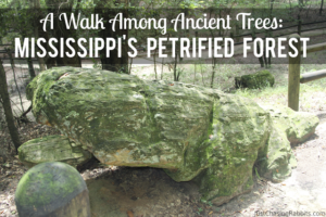 Mississippi's Petrified Forest