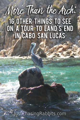 More Than the Arch: 16 Other Things To See on a tour to Land's End in Cabo San Lucas | #Mexico #Baja #Travel | Things to do in Mexico | Things to do in Cabo San Lucas | #elarco