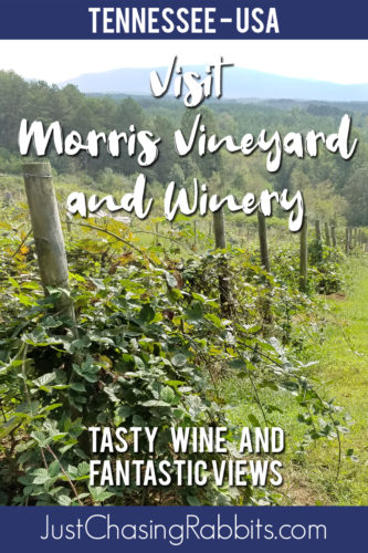 Visit Morris Vineyard and Winery in Tennessee for tasty wine and fantastic views! | #madeinTN #visitClevelandyall #winery #vineyard | Things to do in Tennessee