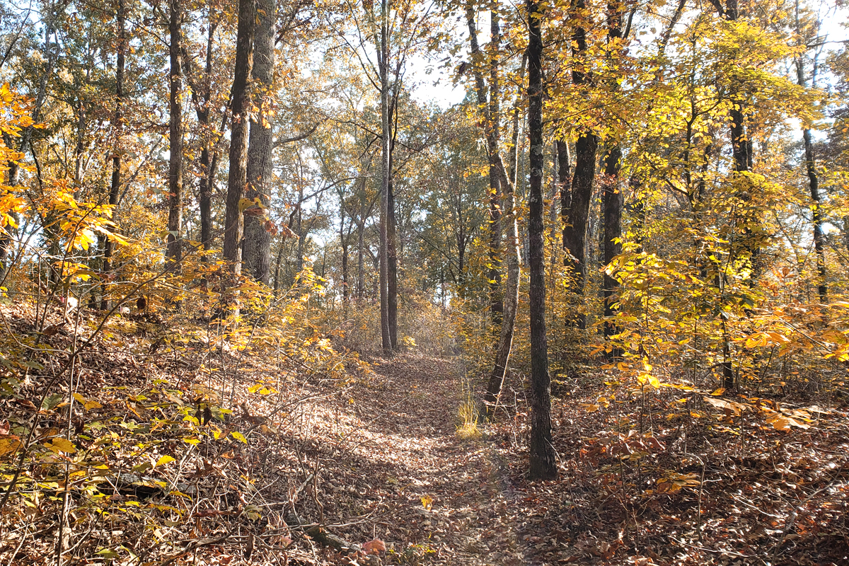 The Old Trace trail with fall colors